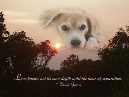 Beagle-Memorial-Photo